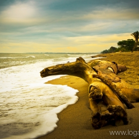 Driftwood on the beach of Ceiba, Honduras