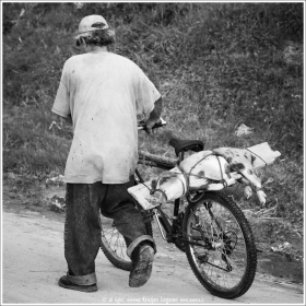 Man walking in Trujillo, Honduras with a pig tide to a plank on his bicycle